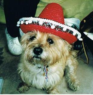 Wendys-Dog