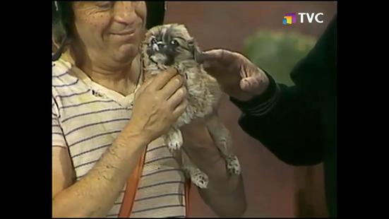perrito-callejero-1976-tvc3.png