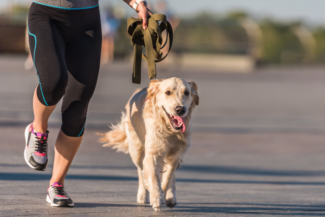 sportswoman-jogging-with-dog