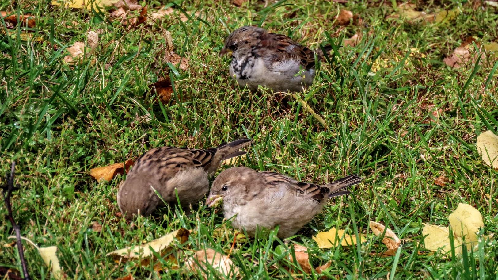 Зеленоглазый и птички 35846514