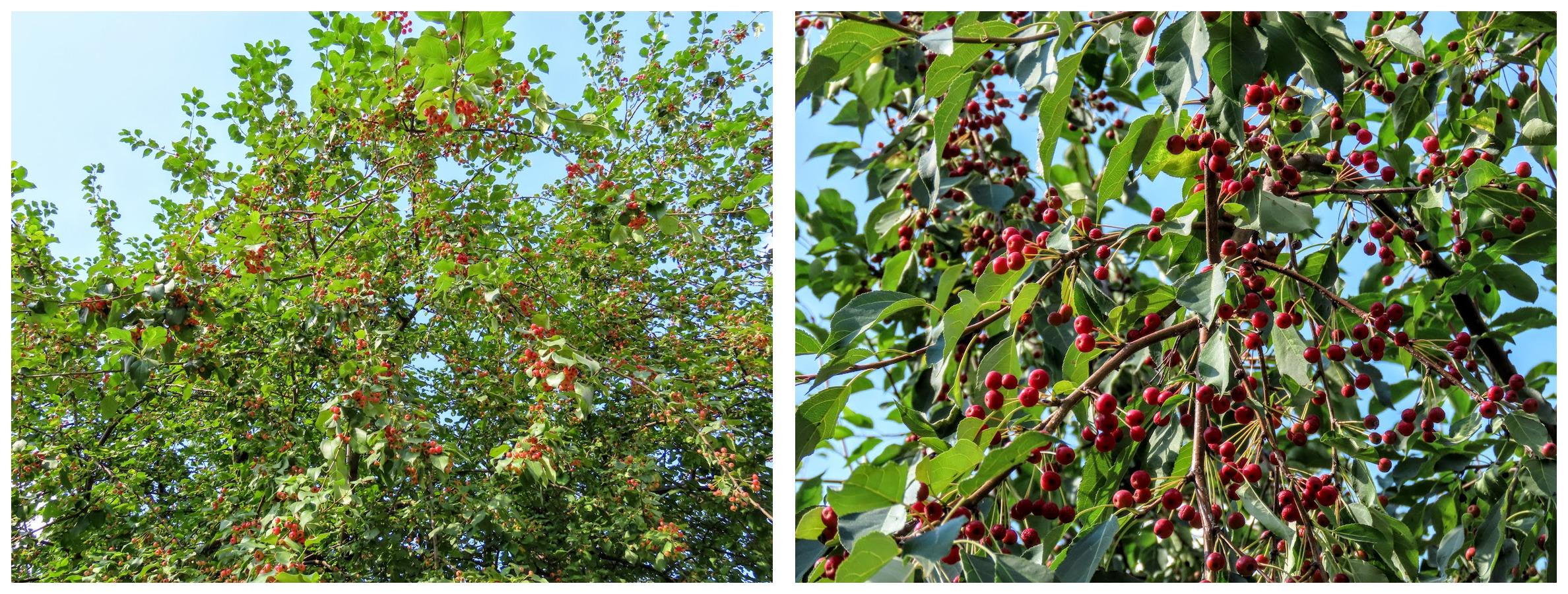 Засентябрило. По старому стилю ещё лето, осень начнётся 14 августа)38 фото imgonline-com-ua-Collage-x-J8-XCVd-Y5-ZR5