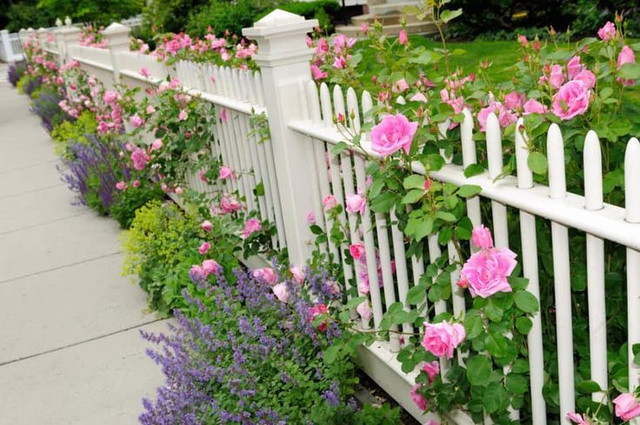 Recommendations for Fence Plants to Make Homes More Beautiful