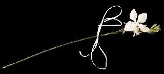 ombreetlumiere-Do-V-47
