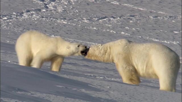 Frozen-Planet-S01-B01-1080p-Dual-HD-TR-Blu-Ray-x264-Uzayli-mkv-snapshot-06-49