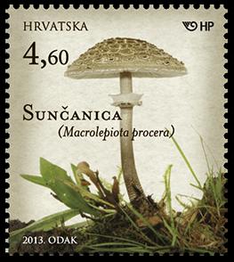2013. year GLJIVE-JESTIVE-GLJIVE-VELIKA-SUN-ANICA