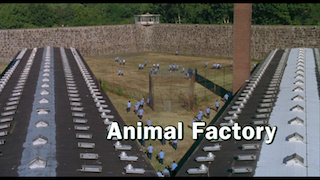 ANIMAL FACTORY 22m37s248.png