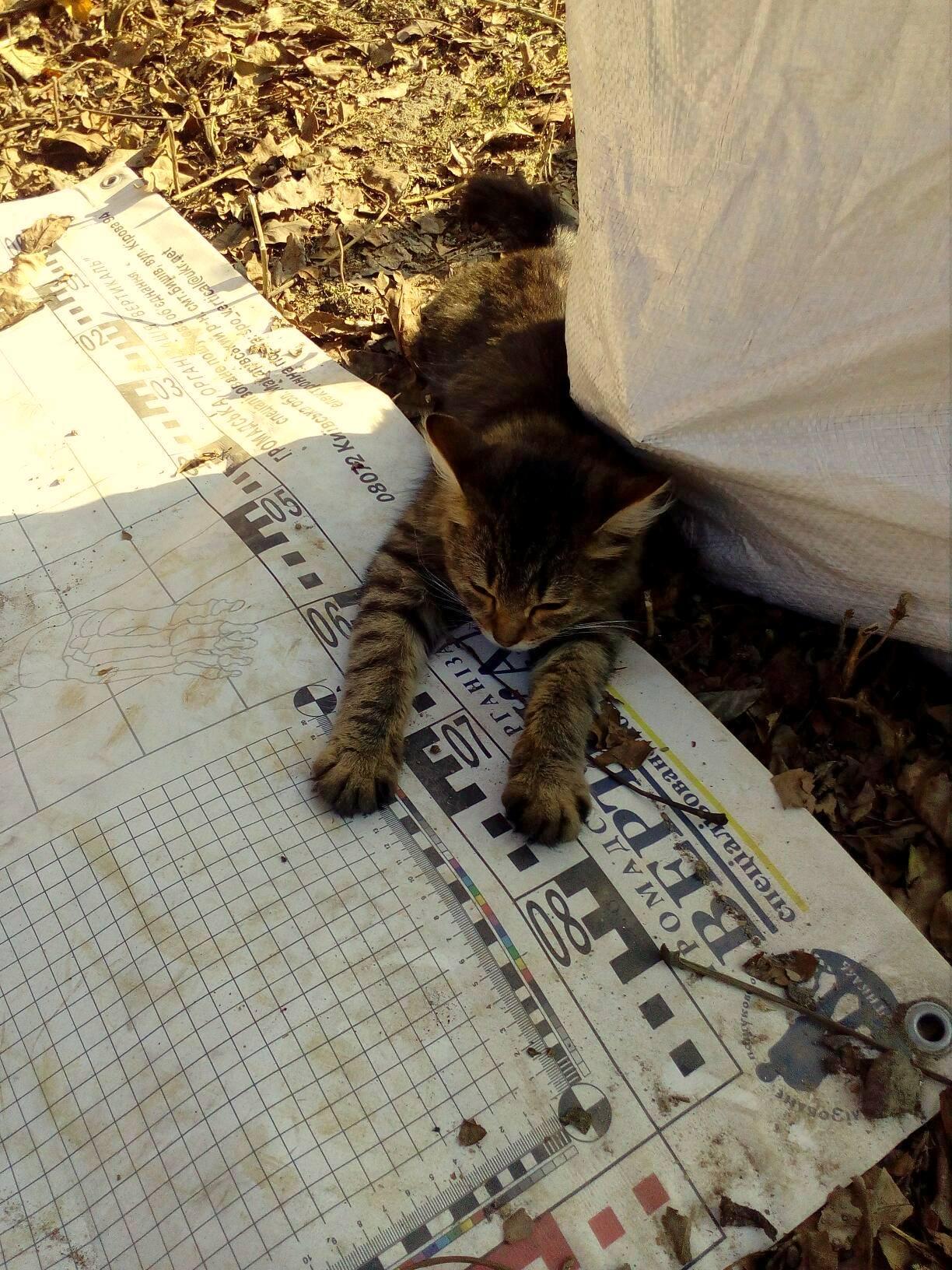 Our little helper.
