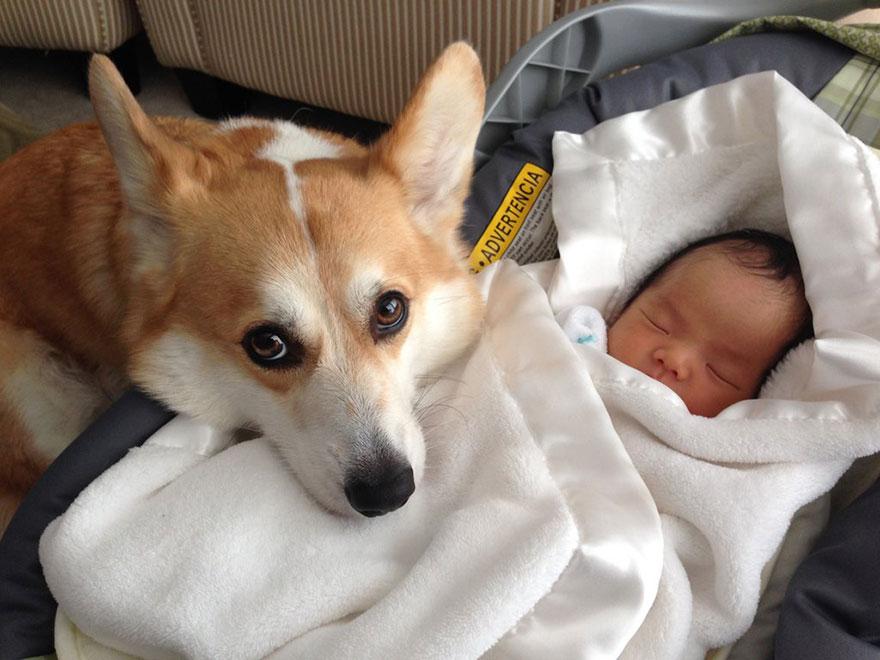 Когда собаки большие, а дети маленькие - 44 потрясающие фотографии - 19