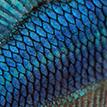 https://i.ibb.co/sqPdQW3/tinypic-blue-fish.png