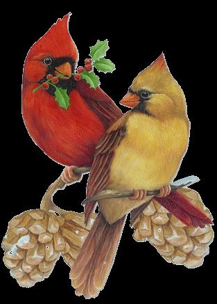 Cardinal-Mates-zpsiedlstki