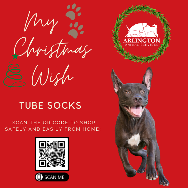 Animal-Services-2020-Angel-Tree-072.png