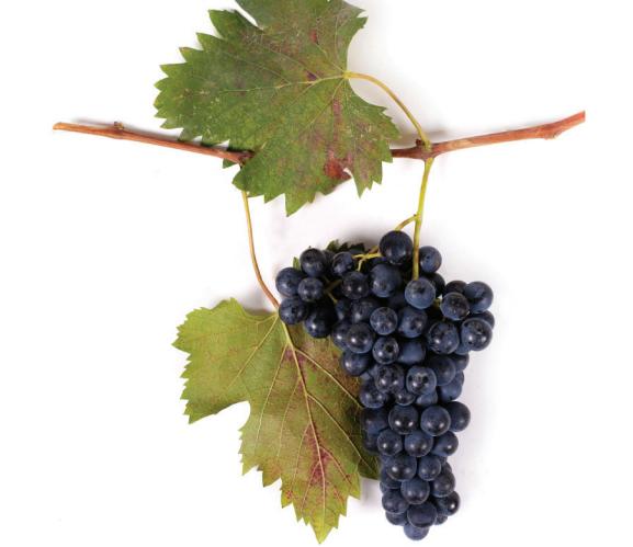 ყურძენი ალადასტური (0.5კგ)