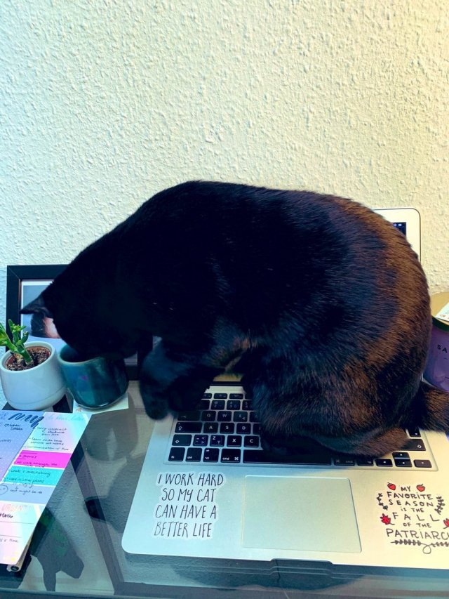 животные на рабочем месте