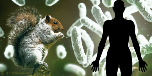 First Human Case Of Plague In Colorado Since 2015 Reported…