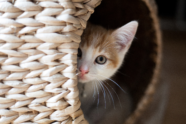 Tips to prevent stress in your cat during confinement