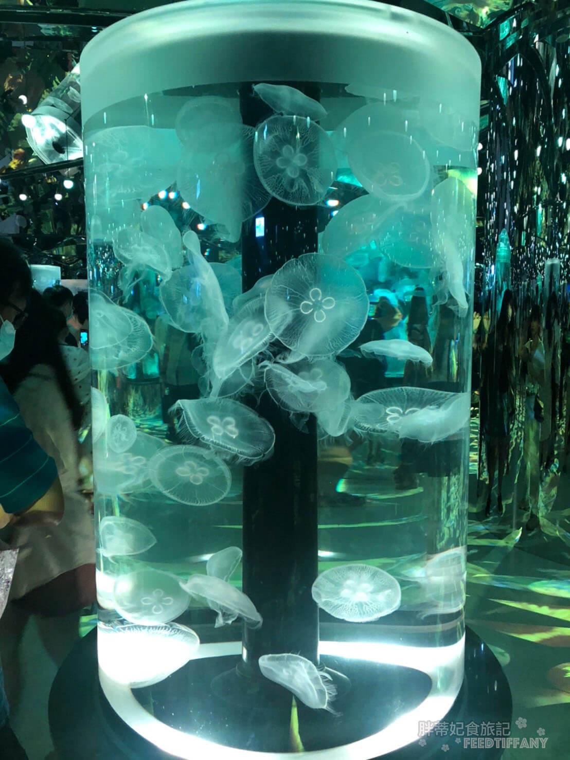Xpark水族館 像萬花筒的水母