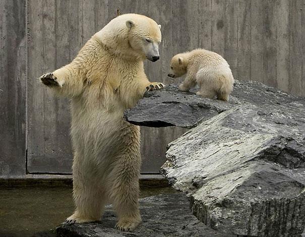 Медведи, такие медведи-24