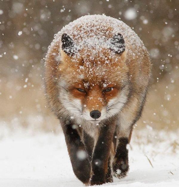 winter photographs 15