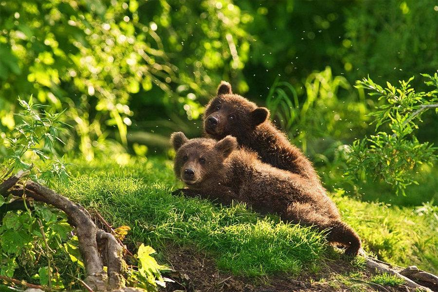 Невероятные фотографии медведей 3
