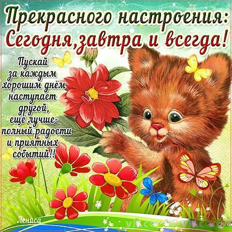 http://i.ibb.co/tJKcNhL/front.jpg