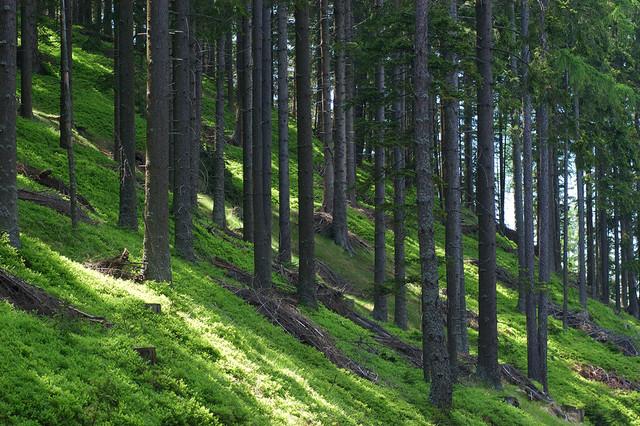 Gozd pohorje1