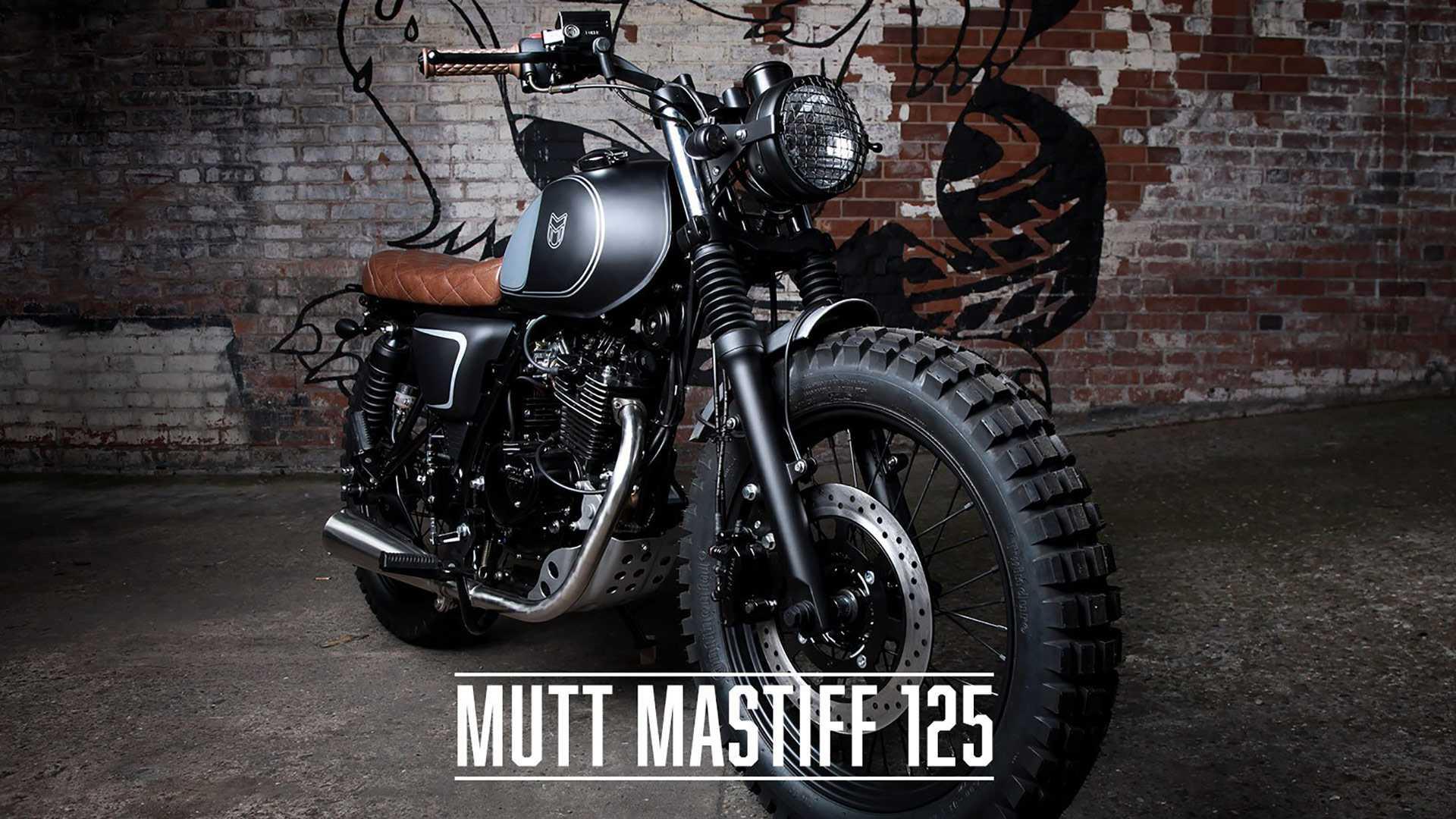 mutt-mastiff-125-9