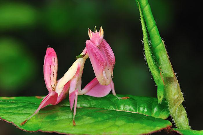 Природа - лучший художник: 40 животных неожиданной расцветки - 11
