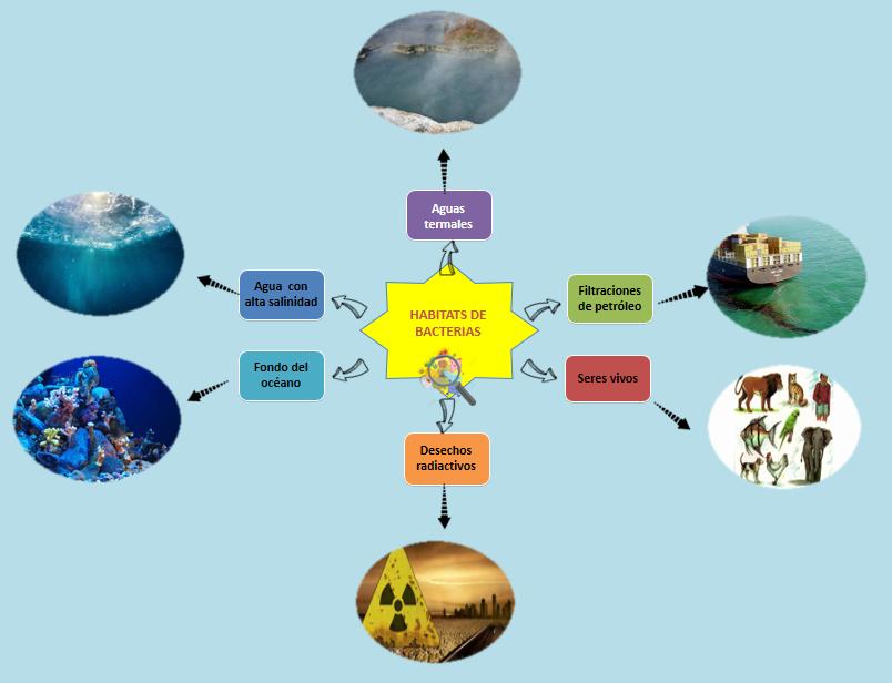 infección bacteriana de la piel del océano
