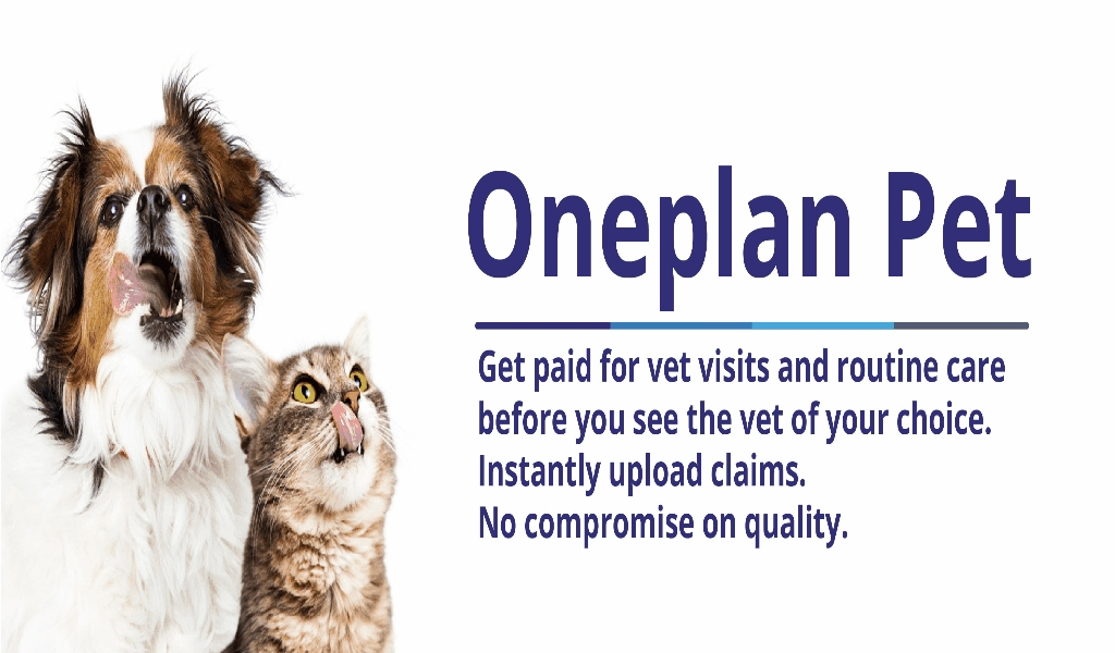VET Market Best Pet Insurance