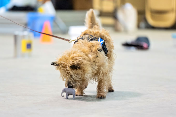 Sniffing games for dogs
