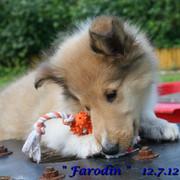 Farodin12-Juli-3