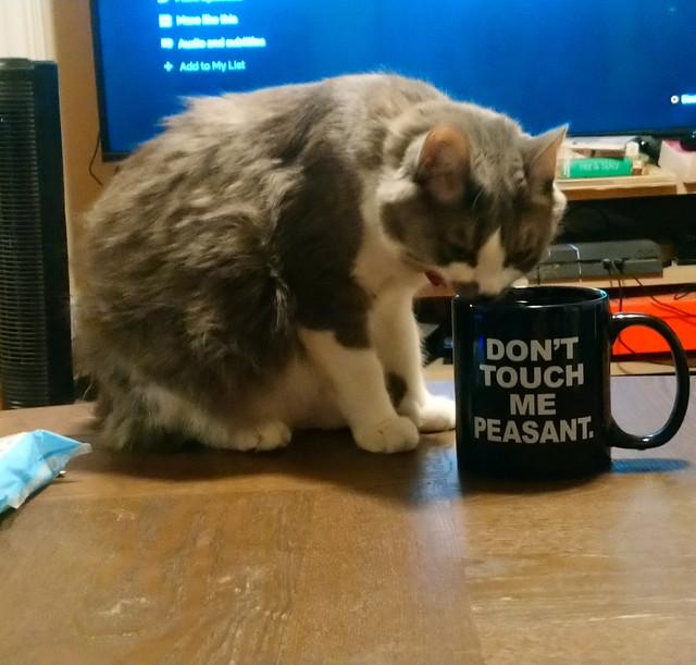 Arya-drinking