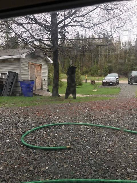 bear d.jpg