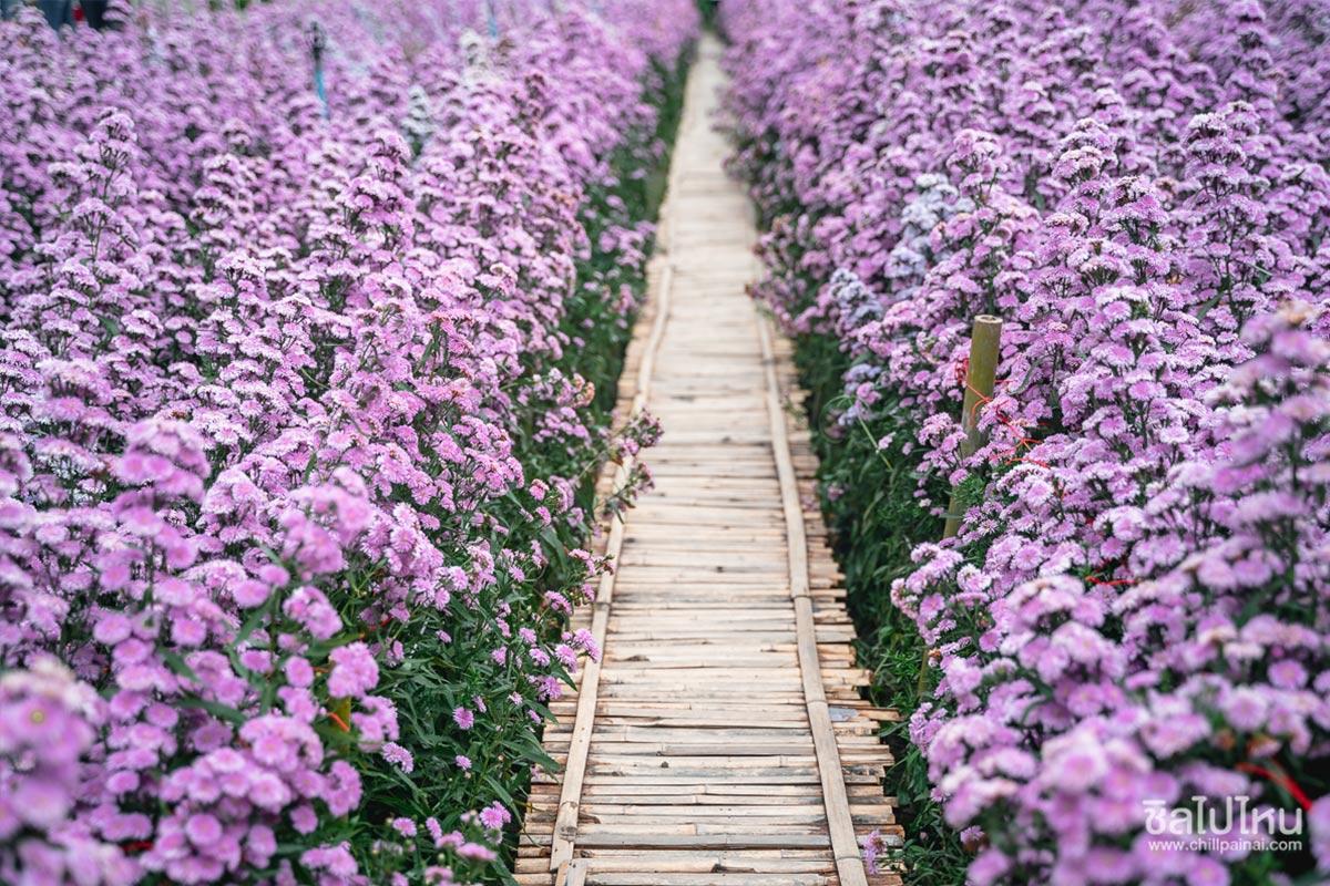 flower-garden-chiangmai