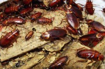 Информационная подборка для тех лиц, кого беспокоят вредные насекомые