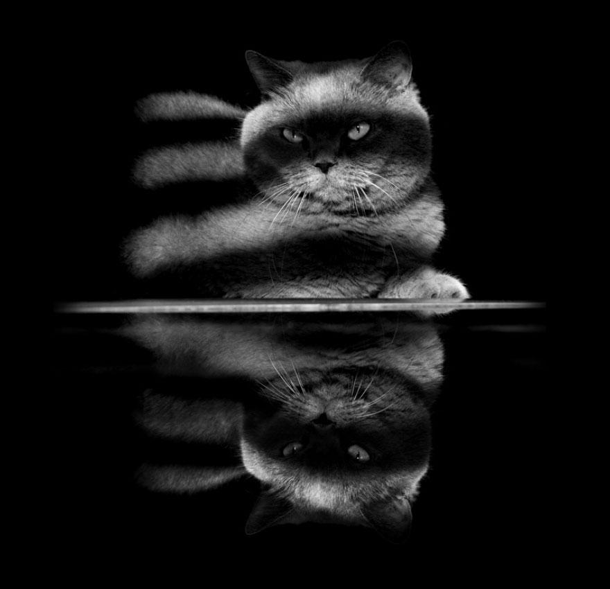 Таинственная кошачья жизнь в чёрно-белых фотографиях-32