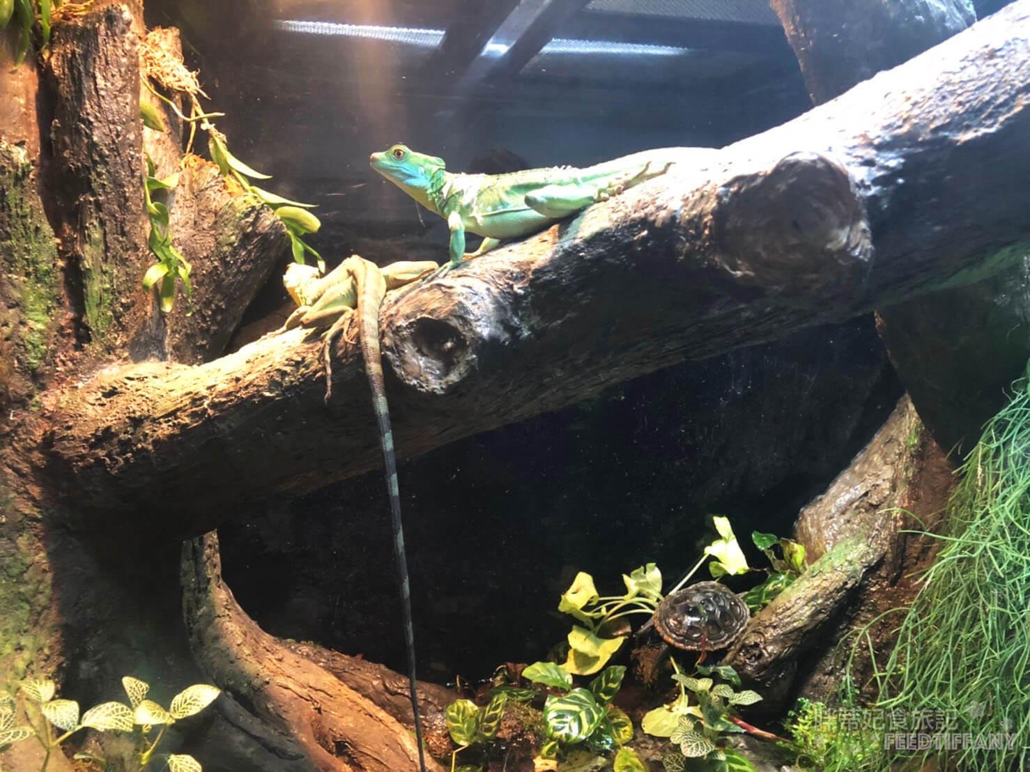 Xpark水族館 兩棲類動物變色龍