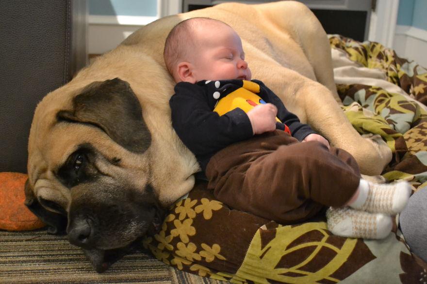 Когда собаки большие, а дети маленькие - 44 потрясающие фотографии - 33