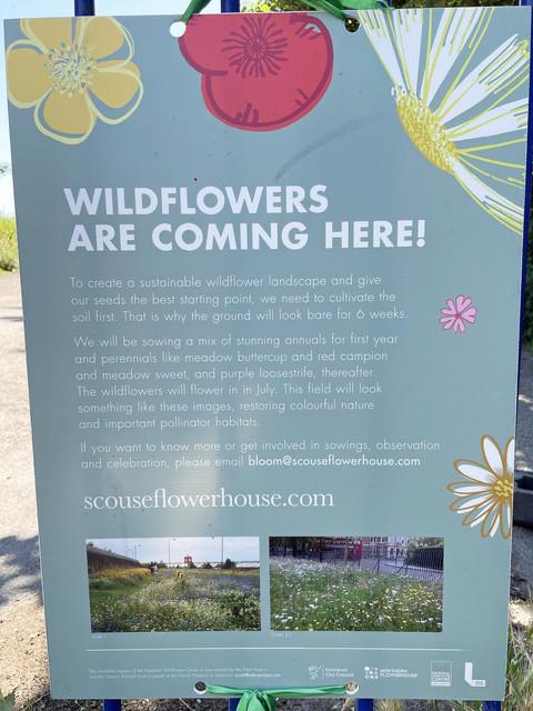 RVC-Park-Wildflower-planting