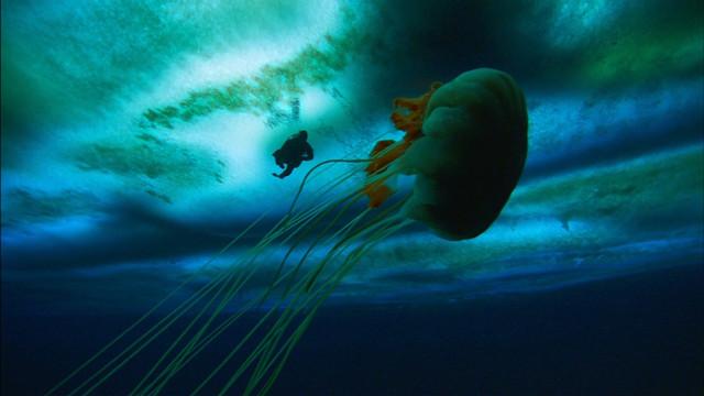 Frozen-Planet-S01-B01-1080p-Dual-HD-TR-Blu-Ray-x264-Uzayli-mkv-snapshot-41-11