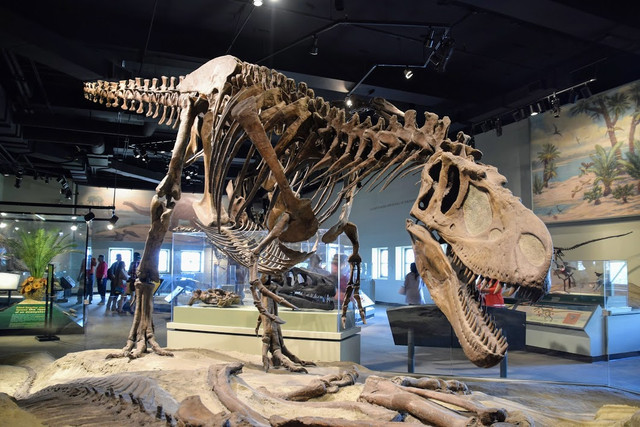 the-field-museum-chicago-travelmarathon-es