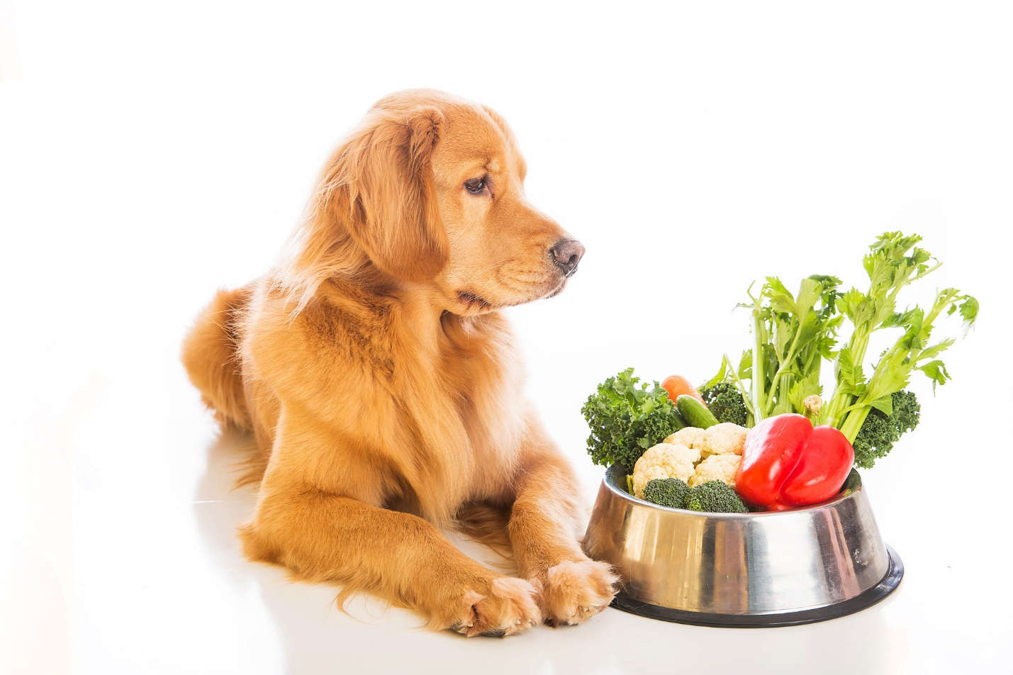 Pampered Pooch: What Are the Healthiest Dog Meals?