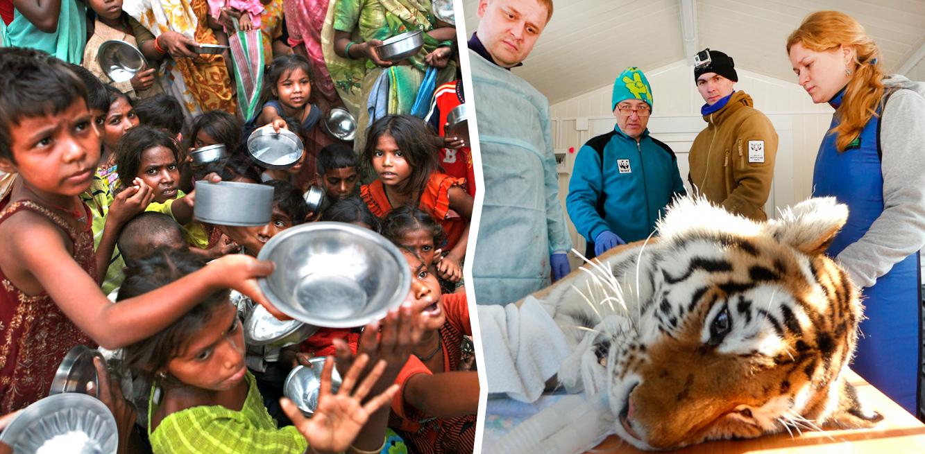 Дети Африка. Тигры.