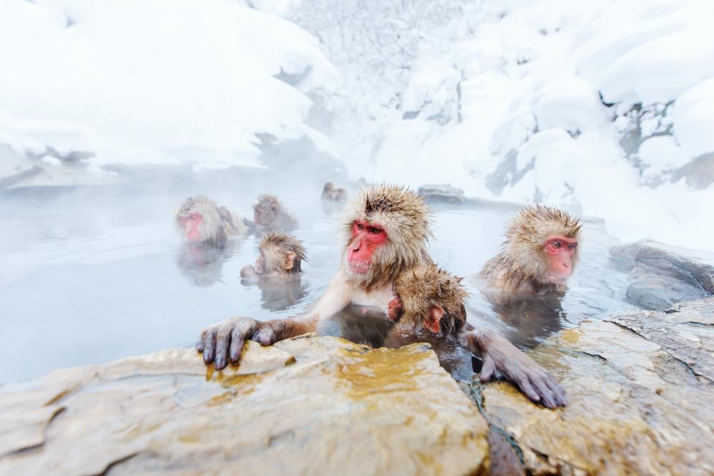 Snow-Monkey-Nagano