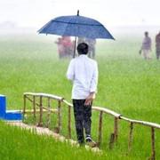 Ahli Petir Sebut Aksi Jokowi ke Tengah Sawah saat Hujan Petir