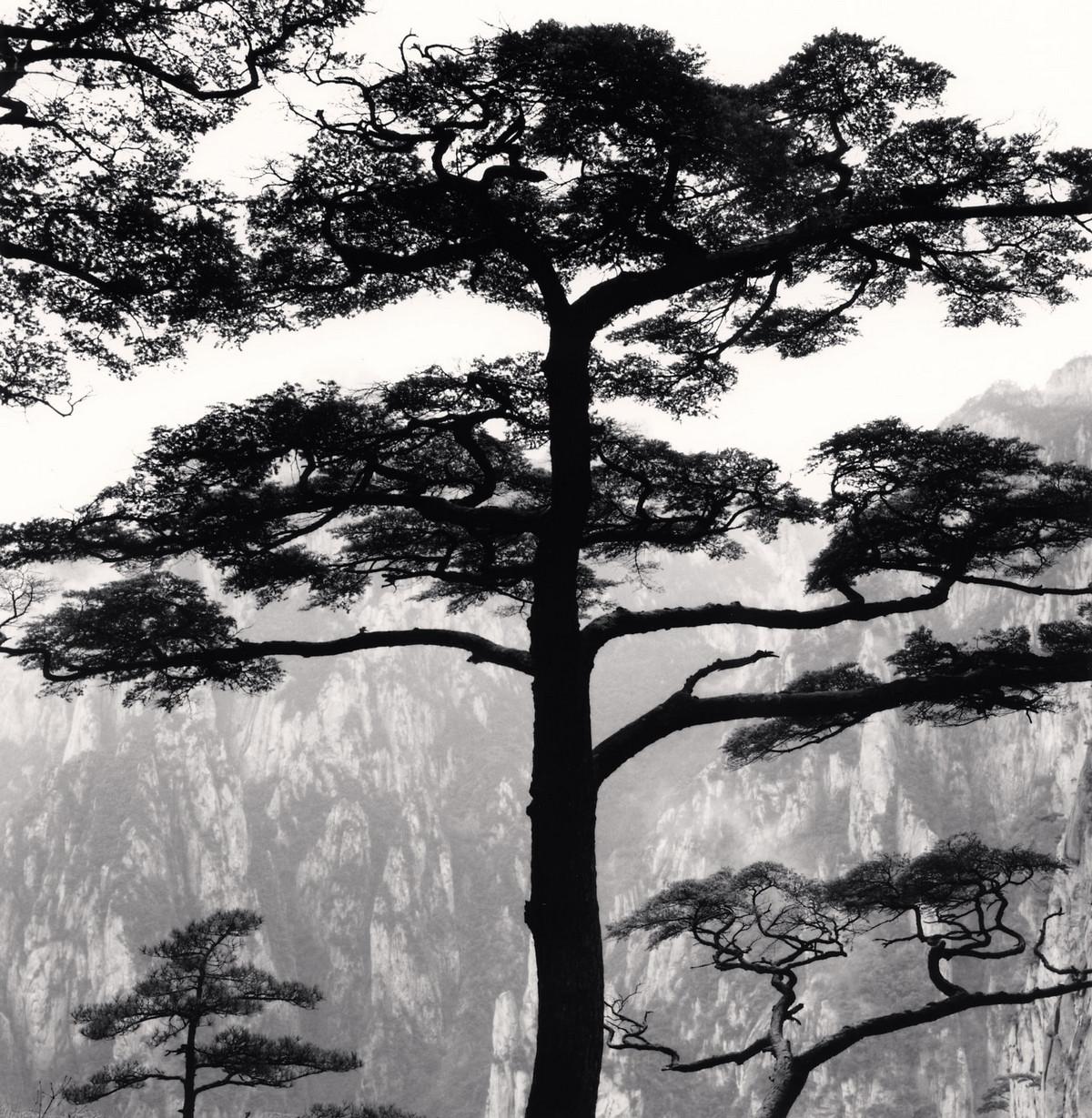 Портреты деревьев Майкла Кенны 1