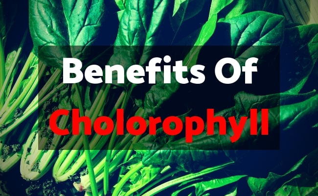 Proven Health Benefits Of Chlorophyll Nutraxyst |