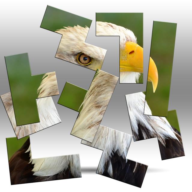 111 Bird of Prey Ppuzzlw 2