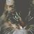 MEDICINE CAT: BRACKENTUFT