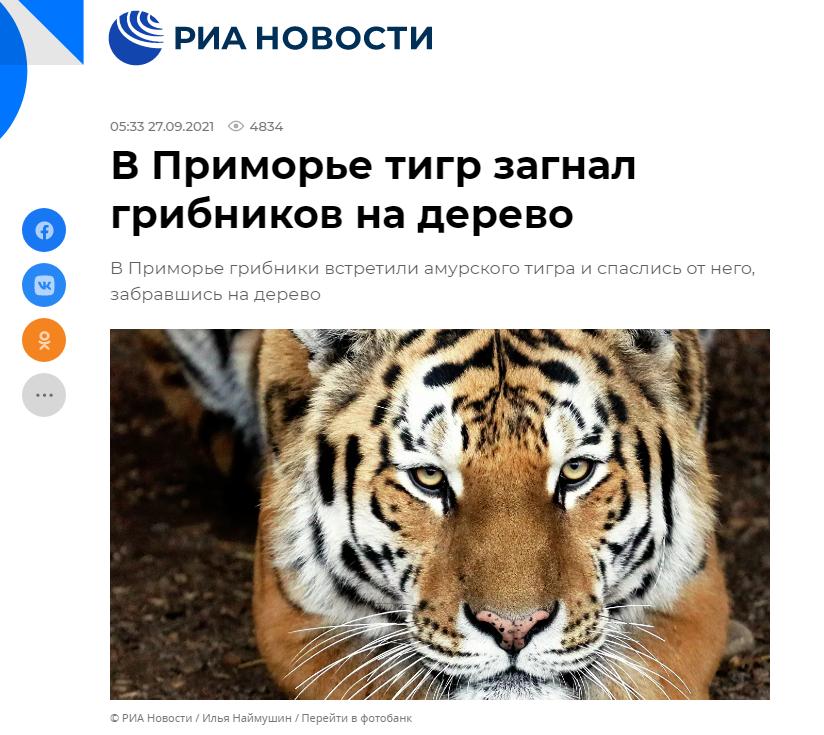 https://i.ibb.co/vZ1cXjs/tigr9.png